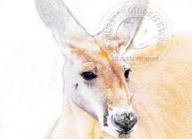 Digital Art Kangaroo