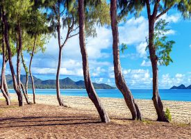 Hawaiian Beach Scene Landscape