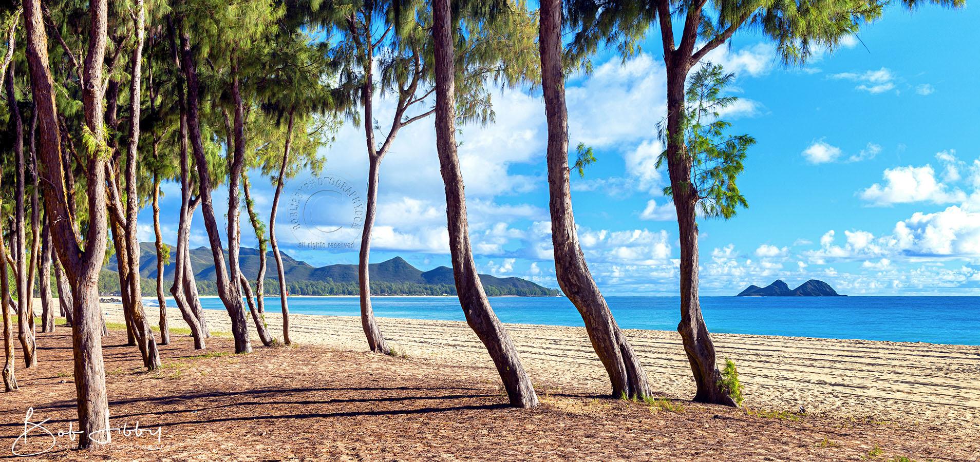 Hawaiian Beach Scene Landscape