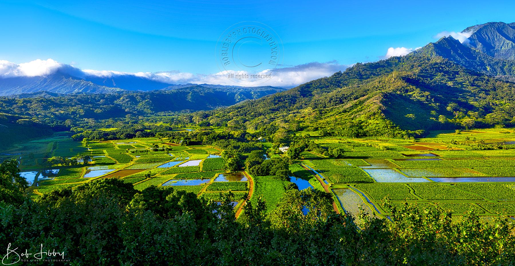 Hawaiian Taro Fields