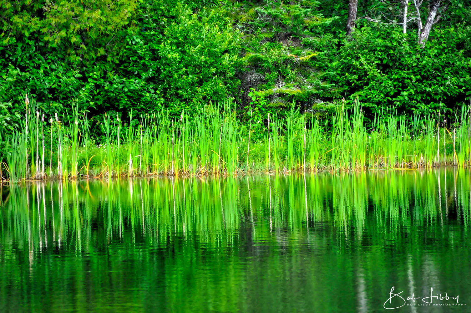 Maine Green Reflections