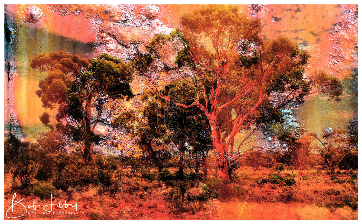 Outback Gum Trees