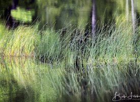 Snow's Pond