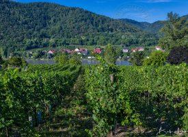 Vineyards at Durnstein
