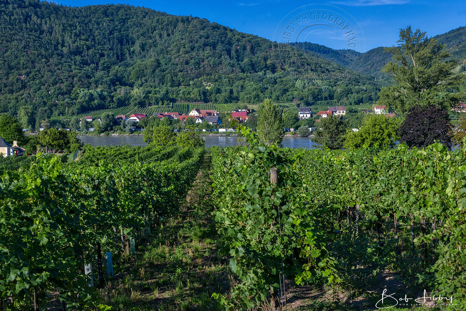 Vineyards at Durnstein