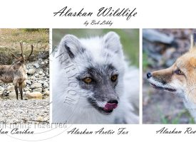 Alaskan Wildlife Series