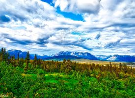 Yukon Landscape